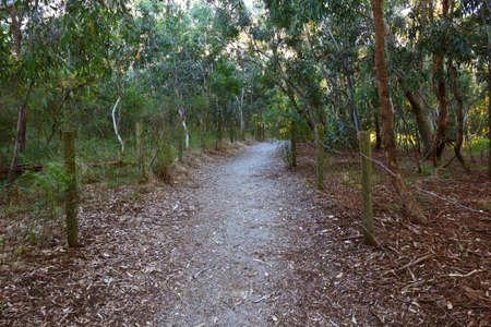 Schmutz bedeckt Wanderweg zwischen den Bäumen