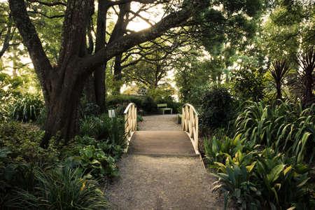 Fußweg auf einer Holzbrücke in einem Wald wie Garten
