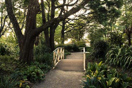 Fußweg auf einer Holzbrücke in einem Wald wie Garten Standard-Bild - 13007690