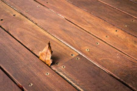 Piece of autumn leaf eingekeilt zwischen dem Holzdeck