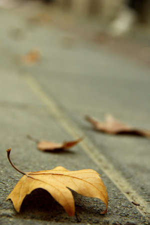 Close up to a fallen leaves