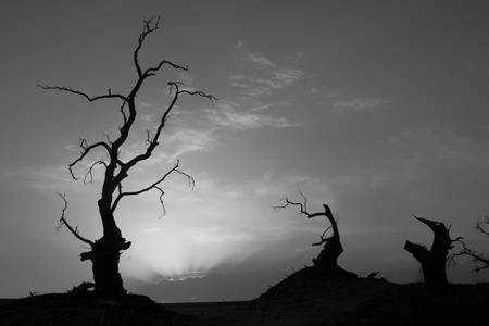 At sunset, dead trees stand in the Taklamakan desert in China