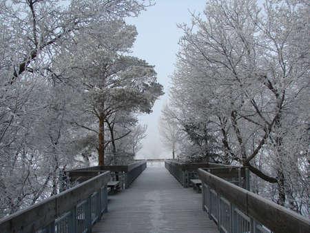 冷ややかな朝ワスカナ湖で outlook 写真素材