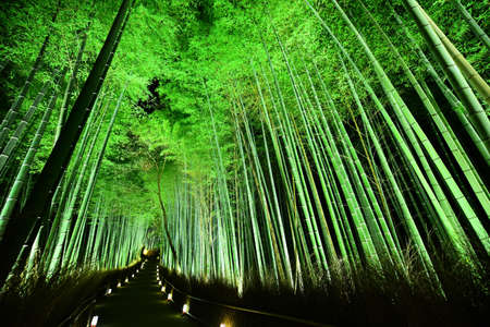 lightup: Kyoto bamboo forest Stock Photo