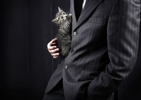 deceit: businessman in grey suit and striped kitten in his hands. �lose-up photo.