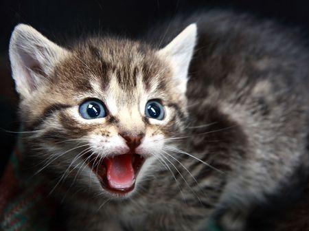 Small Kitten.  photo