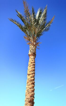 palm tree on blue sky background photo