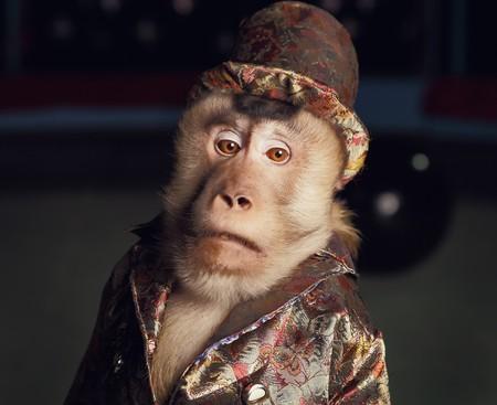 chimpansee: Circus chimpansee aap in een pak en een hoed  Stockfoto