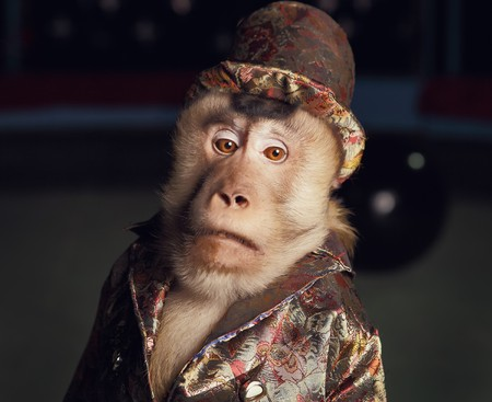 Circus chimpanzee monkey in a suit and a hat