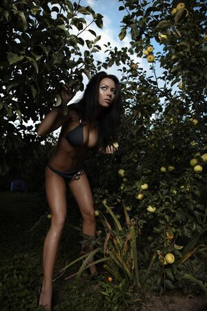 Sexual beauty dressed bikini poses in an autumn garden of apples. Stock Photo - 8091933