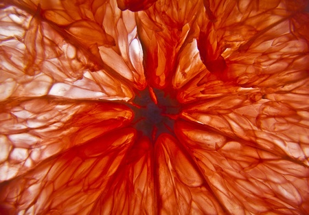Pamplemousse rouge tranche photo Contexte