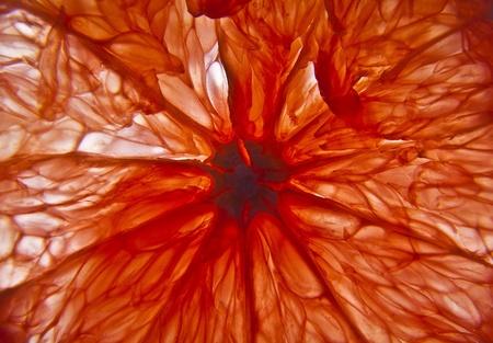 Red grapefruit slice  Background photo   Stock Photo