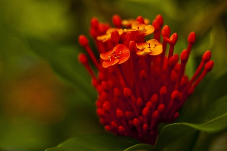 Exotic flowers photo
