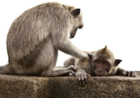 Monkey  Bali a zoo  Indonesia Stock Photo - 13066327