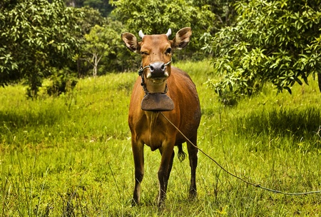 Cow resting on green grass Stock Photo - 13066475