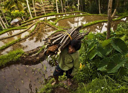 Worker  Bali - Indonesia  Stock Photo - 13315678