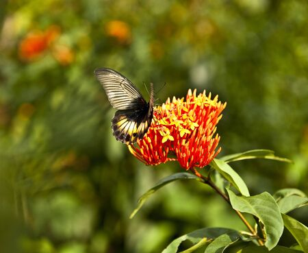 Butterfly feeding on spring flower   photo