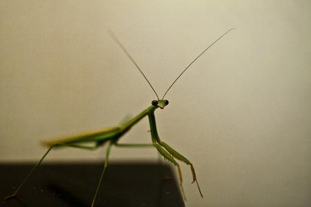 devour: Praying mantis