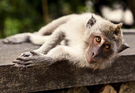 Monkey  Bali a zoo  Indonesia Stock Photo - 13066292
