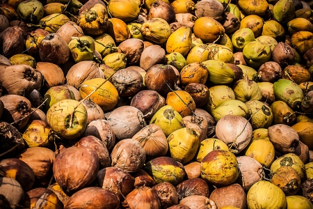 Field of coconut trees photo