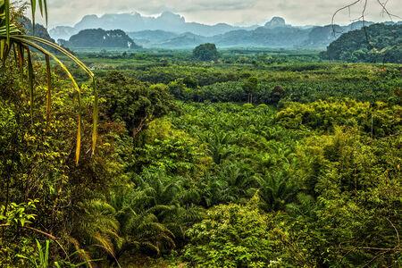 national forest: Thailand rain forest landscape