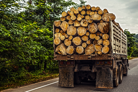 Truck transporting timber photo