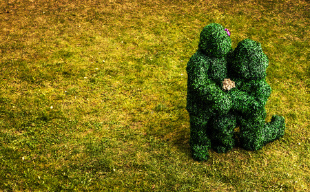 Family of live bushes. Outdoor fairy tale style photo. photo