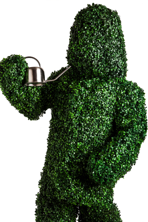 Live bush pose holding garden watering can, isolated on a white . Studio photo. photo