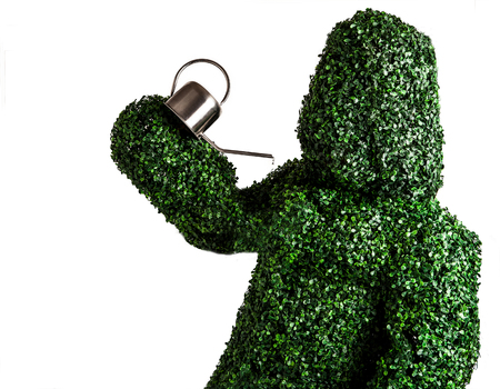 Live bush pose holding garden watering can, isolated on a white background. Studio photo. photo