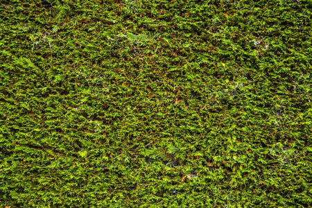 vegetation: Green vegetation background.
