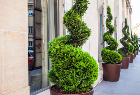 vegetation: Decorative street vegetation.