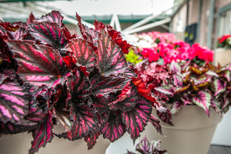 floristic: Floristic decorative elements close-up. Stock Photo