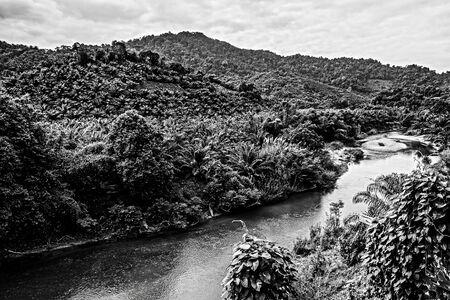 blackwhite: River in tropical jungle. Black-white photo.