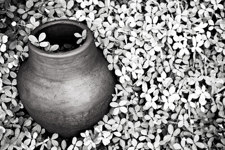 blackwhite: Black-white photo of old jar covered vegetation. Stock Photo