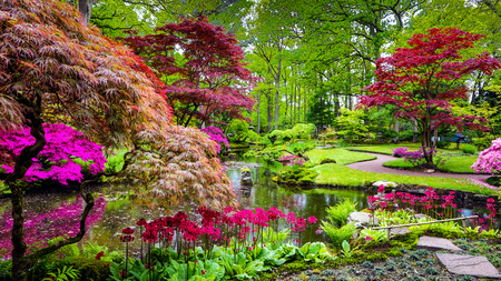Traditional Japanese Garden in The Hague. 스톡 콘텐츠