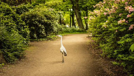 Heron staying in beautiful park.