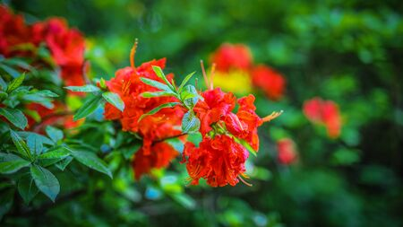 Flowers bush as summer nature background. Banque d'images