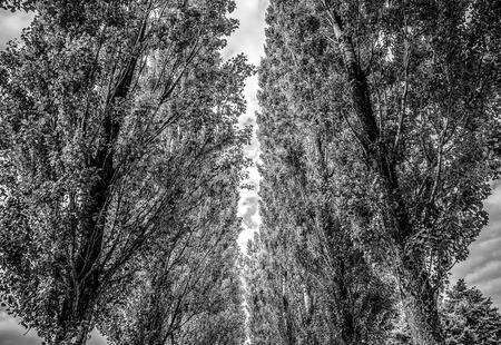 Long trees in park close-up. Banco de Imagens