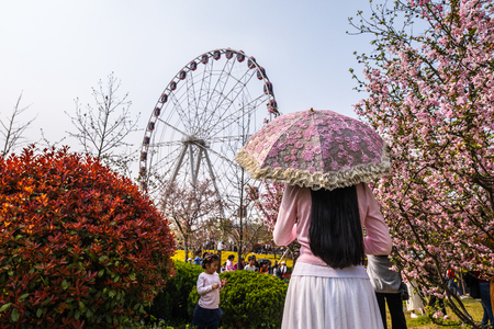 Sakura blossom in Chinese park.