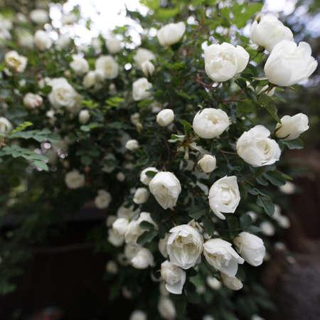 Beautiful summer garden flowers close-up. 스톡 콘텐츠