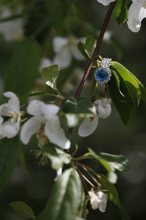 nestled: Blue diamond engagment ring nestled on blooming branch sparkling