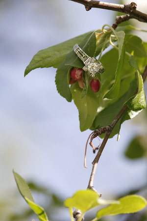 diamond ring: Diamond wedding ring on flower bud branch for engagment