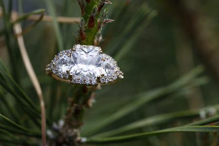diamante: joya anillo de boda anidada dentro de una rama de árbol en la naturaleza