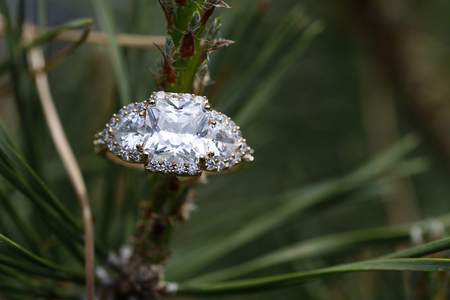 diamond ring: Wedding gem ring nested within a tree branch in nature