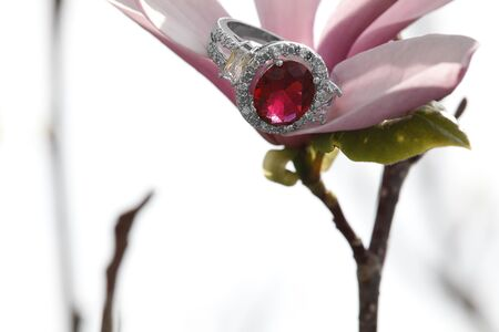 gems: Pink diamond tourmaline engagement ring hidden amongst tree blooms Stock Photo