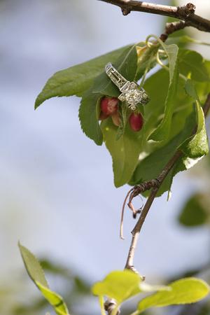 Diamond wedding ring on flower bud branch for engagment
