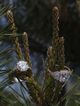 Two gemstone diamond wedding and engagement rings or a pine tree. In nature.