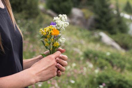 Female hands holding wildflowers, summer Stock Photo