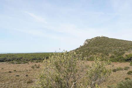 shrunken: Views of the inner forest of Maremma Park