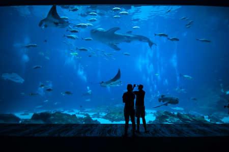 peces de acuario: Gente observando los peces en el acuario